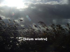 Trzciny targane wiatrem. Na niebie ciemne chmury.