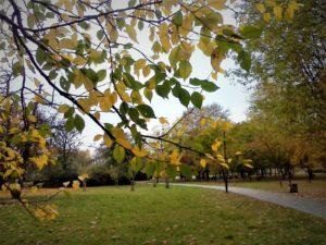 Park w kolorach jesieni