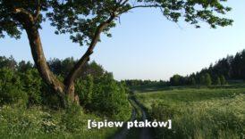 Ścieżka wśród zielonych łąk. W górze - błękitne niebo.